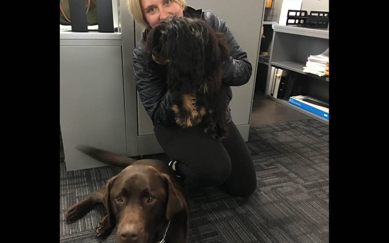 Bring a Dog to Work Day – Shannon & Associates CPAs Kent, WA